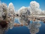 Árboles nevados que se reflejan en el agua