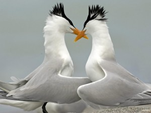 Postal: Pájaros enamorados