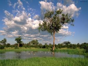 Un estanque natural