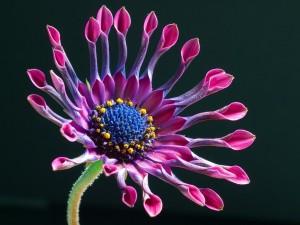 Hermosa flor púrpura