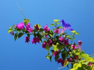 Una ramita llena de flores