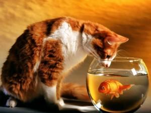 Un gato observando a un pez