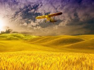 Avioneta Cessna sobrevolando campos de trigo