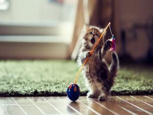 Postal: Pequeño gatito jugando