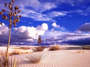 Vegetación seca en un desierto de arena blanca