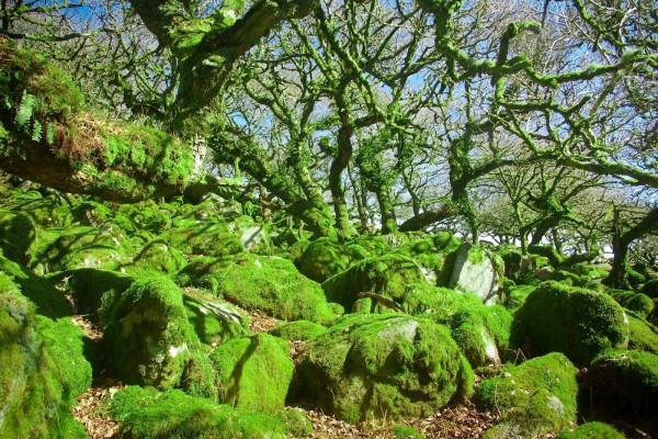Árboles y rocas cubiertas de musgo
