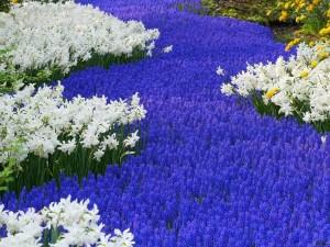 Un río de flores violáceas