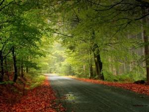 Carretera entre árboles y hojas