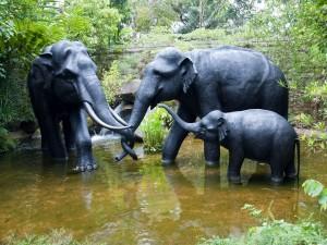 Postal: Familia de elefantes disfrutando del agua