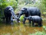 Familia de elefantes disfrutando del agua