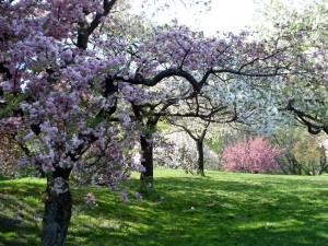 Dentro del Jardín Botánico de Nueva York