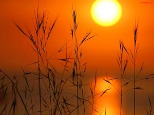 Postal: Espigas con el Sol de fondo