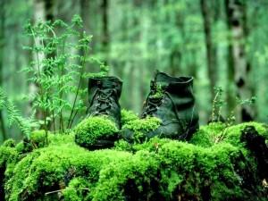 Postal: Botas cubiertas de musgo