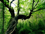 En las profundidades del bosque