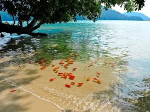 Postal: Playa en Surín (Tailandia)
