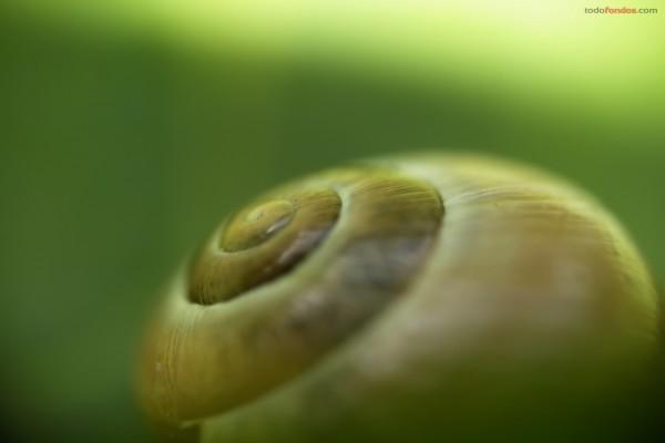 Concha de un caracol