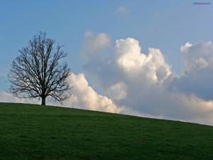Árbol sin hojas sobre la hierba verde