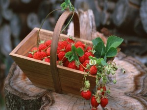 Postal: Fresas en una cestita