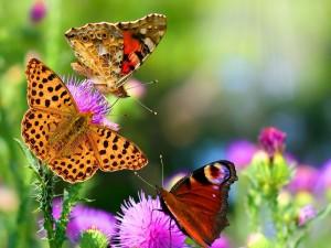 Mariposas multicolores posadas sobre flores