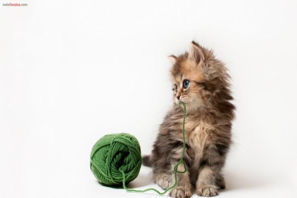 Gatito con un ovillo de lana