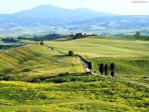 Postal: Campos verdes en la Toscana, Italia