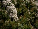 Las flores de primavera
