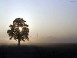 Postal: El sol a través de las ramas de un árbol