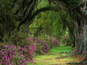 Vegetación profunda