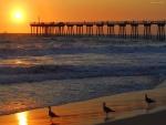 Gaviotas en la playa con la puesta de sol