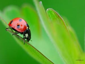 Postal: Mariquita agarrada a una hoja verde
