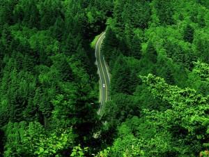 Carretera atravesando el bosque