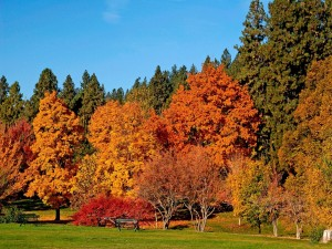Postal: Árboles con hojas doradas