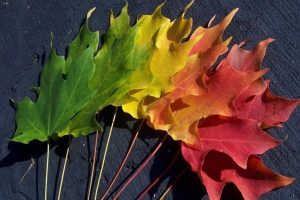 Espectro de color en las hojas