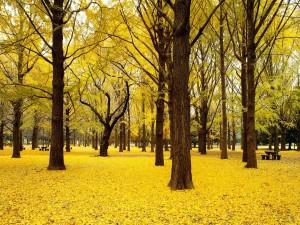Arboleda de hojas amarillas