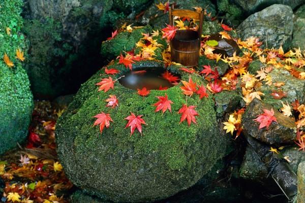 Hojas caídas sobre piedras musgosas