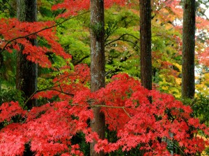 Postal: Ramas de hojas rojas