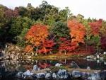 Un bosque multicolor