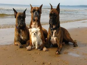 Cuatro perros sentados a la orilla del mar