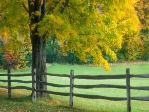 Árbol junto a una cerca