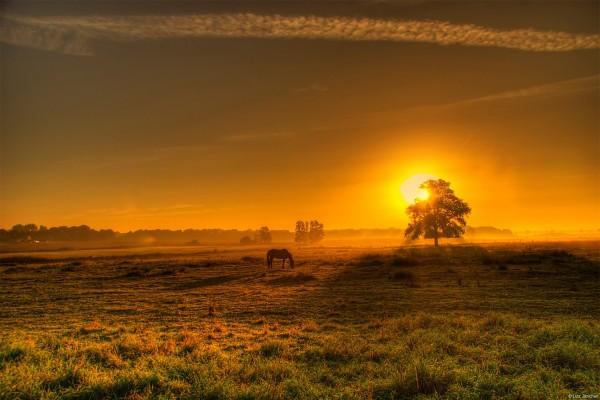 El Sol tiñendo de dorado el campo