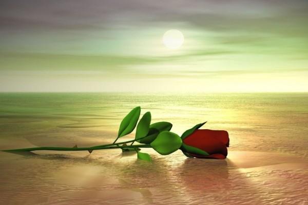 Una rosa en la playa