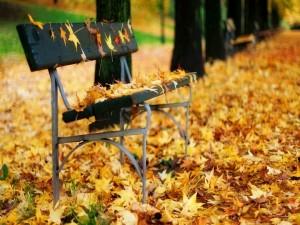 Postal: Banco lleno de hojas en otoño