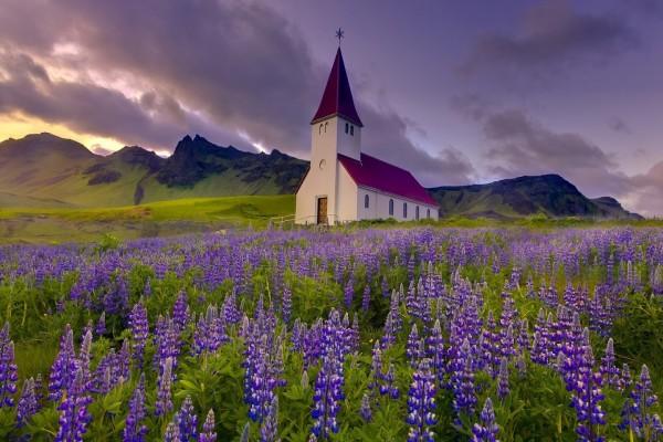 Iglesia de montaña frente a un prado de flores de lupino
