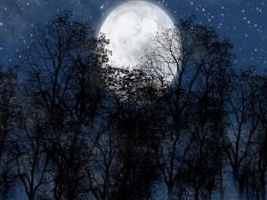Postal: Luna llena tras los árboles