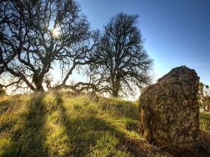 Árboles y una gran piedra