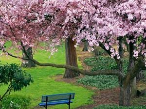 Árbol en flor