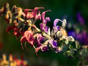 Abeja polinizando unas florecillas