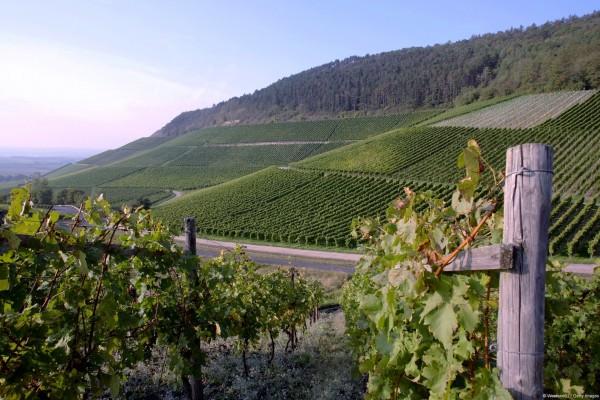 Campos de viñedos en Alemania