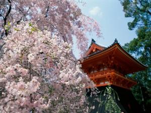 Postal: Cerezos en flor cerca de un templo oriental