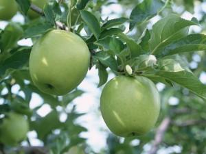 Un par de manzanas verdes